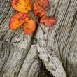 Autumn leaves on the wooden background — Stock Photo #1290554