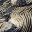 Shell on the old wooden surface — Stock Photo