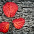 Autumn leaves on the wooden background — Stock Photo #1290602