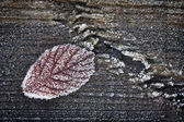Leaf on frozen woooden background — Stock Photo