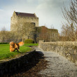 Athenry Castle and playing dog — Stock Photo