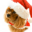 Cute sitting dog in Santa dress — Stock Photo