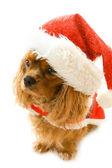 Cute sitting dog in Santa dress — Stock Photo