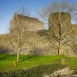 Athenry Castle and plaing dog,Autumn — Stock Photo