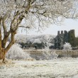 Stock Photo: Castle ruins and trees covered by frost