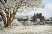 Castle ruins and trees covered by frost — Stock Photo