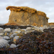Stock Photo: Lone cliff on stony beach and seaweed
