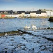 Ice on the bank of Corrib and swans - Stock Photo
