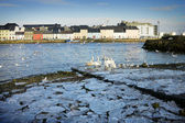 Ice on the bank of Corrib and swans — Stock Photo
