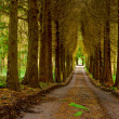 Pine wood and vanishing road — Stock Photo