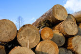 Heap of pine wood logs — Stock Photo