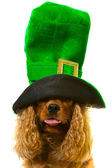 Dog in green hat — Stock Photo