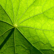Leaf — Stock Photo #1182643