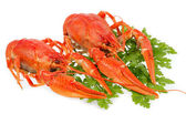 European crayfish — Stock Photo