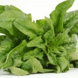 Spinach — Stock Photo