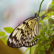 Royalty-Free Stock Photo: Butterfly