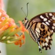 Butterfly — Stock Photo #1221269
