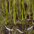Ice and grass - Photo