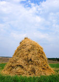 Haystack hay straw — Stock Photo
