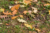 Autumn background,oak, leaf, acorn. — Stock Photo