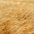 Ripe wheat close-up — Stock Photo #1353487