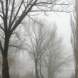 Obscure woods in tight fog — Stock Photo