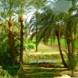 Green outskirts of Luxor, Egypt — Stock Photo