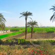 Greeny plantations in outskirts of Luxor — Stock Photo