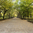 Center Park NY . Beautiful park in beau — Stock Photo