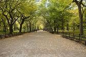 Center Park NY . Beautiful park in beau — Stock Photo