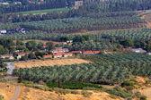 Panoramic view of banana palm plantation — Stock Photo
