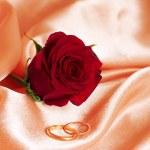 γάμου τριαντάφυλλο — Φωτογραφία Αρχείου