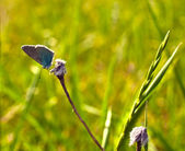 Butterfly on a grass — Stock Photo