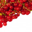 Red currant on white background - Stock Photo