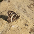 Butterfly on stone - Stock Photo