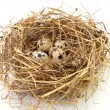 Quail eggs in the nest on white backgrou - Stock Photo
