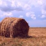 Single haycock on a field — Stock Photo