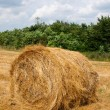 Single haycock on the field in cloudy we - Stock Photo