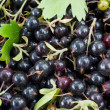 Black currant as background. - Stock Photo
