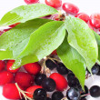 Cornelian cherry and black currant - Stock Photo