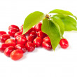 Cornelian cherry — Stock Photo #1177549