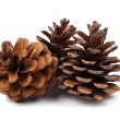 Stock Photo: Fir cones
