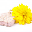 Yellow flower and pumice — Stock Photo
