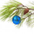 Christmas ball on pine branch — Stock Photo