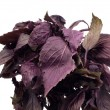 Violet basil - Stock Photo