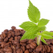 Stock Photo: Green plant growing in coffee beans