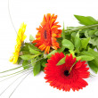 Bouquet with gerbers — Stock Photo