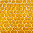 Fresh honey in the comb — Stock Photo