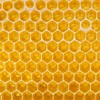 Fresh honey in the comb — Stock Photo #1179959