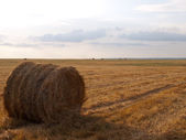 Single haycock on a field under sunlight — Stock Photo